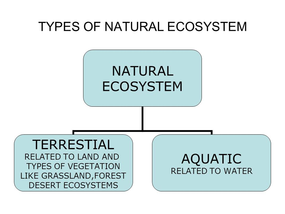 TYPES OF NATURAL ECOSYSTEM