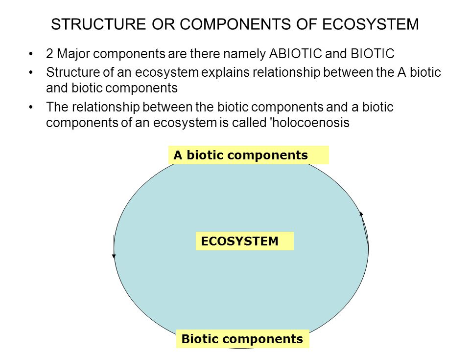 STRUCTURE OR COMPONENTS OF ECOSYSTEM
