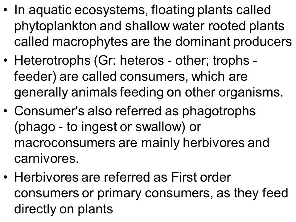 In aquatic ecosystems, floating plants called phytoplankton and shallow water rooted plants called macrophytes are the dominant producers