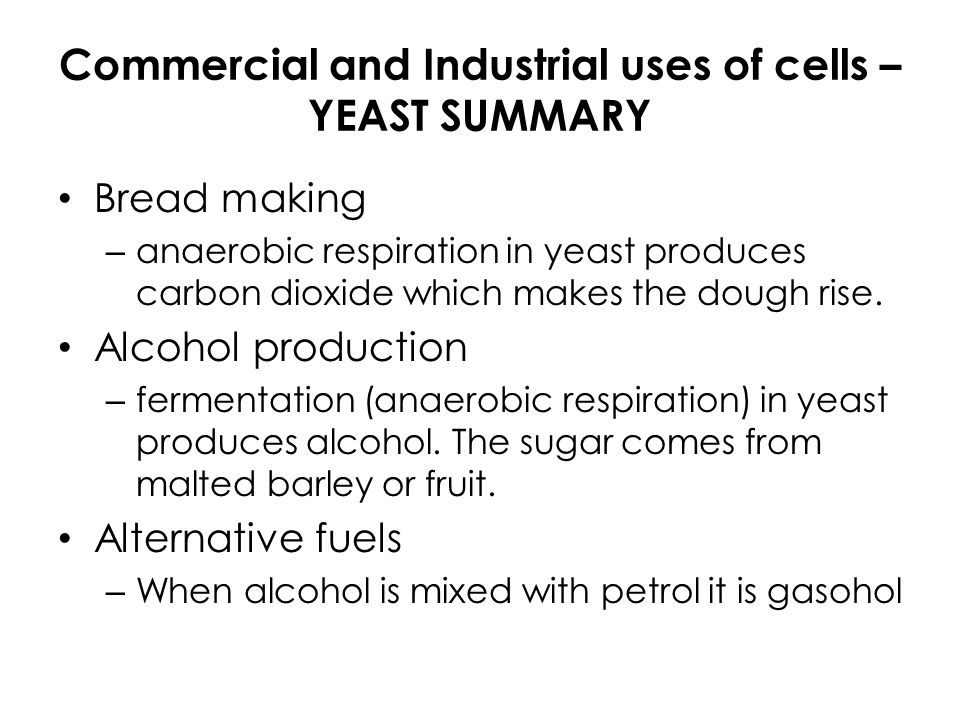 effect glucose concentration anaerobic respiration yeast The effect of temperature on the anaerobic respiration of yeast  read about anaerobic respiration in yeast  recover from the effects in anaerobic respiration .