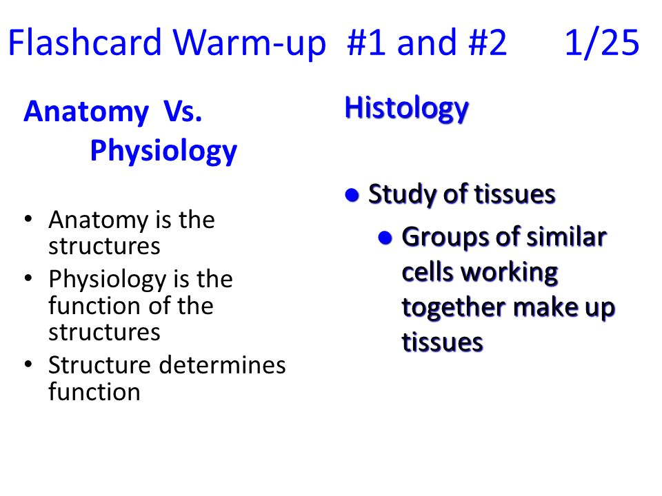 Flashcard Warm Up 1 And 2 125 Ppt Video Online Download