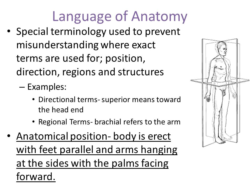 Examples Of Directional Terms
