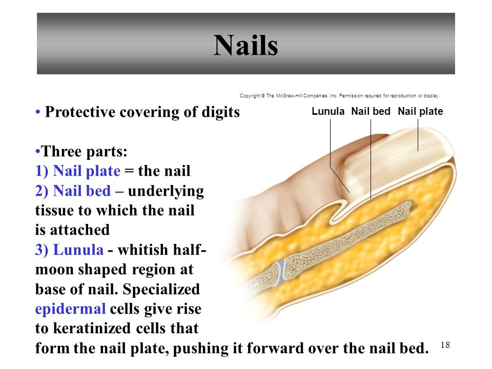 18 Nails Protective Covering Of Digits Three