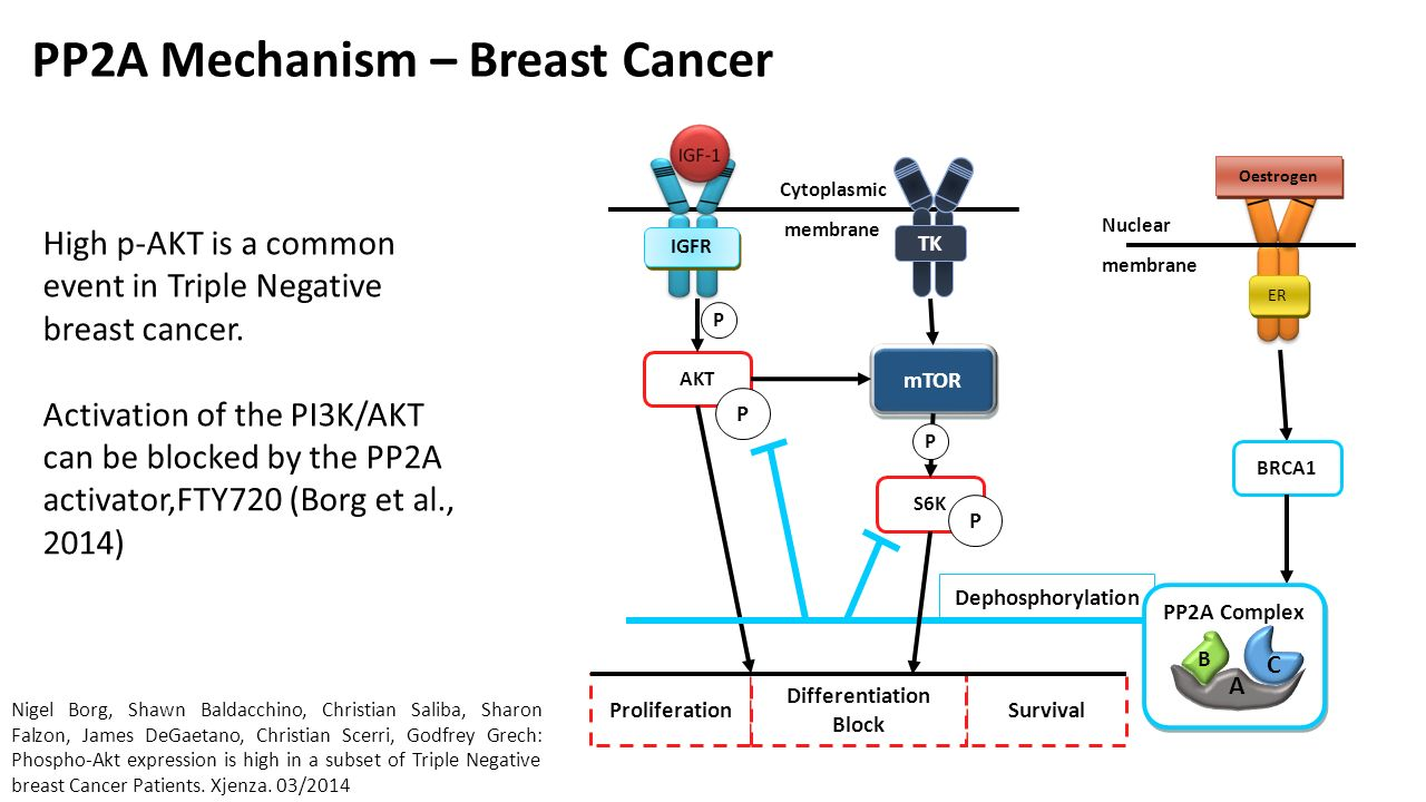 Molecular Classification Of Breast Cancer Using A