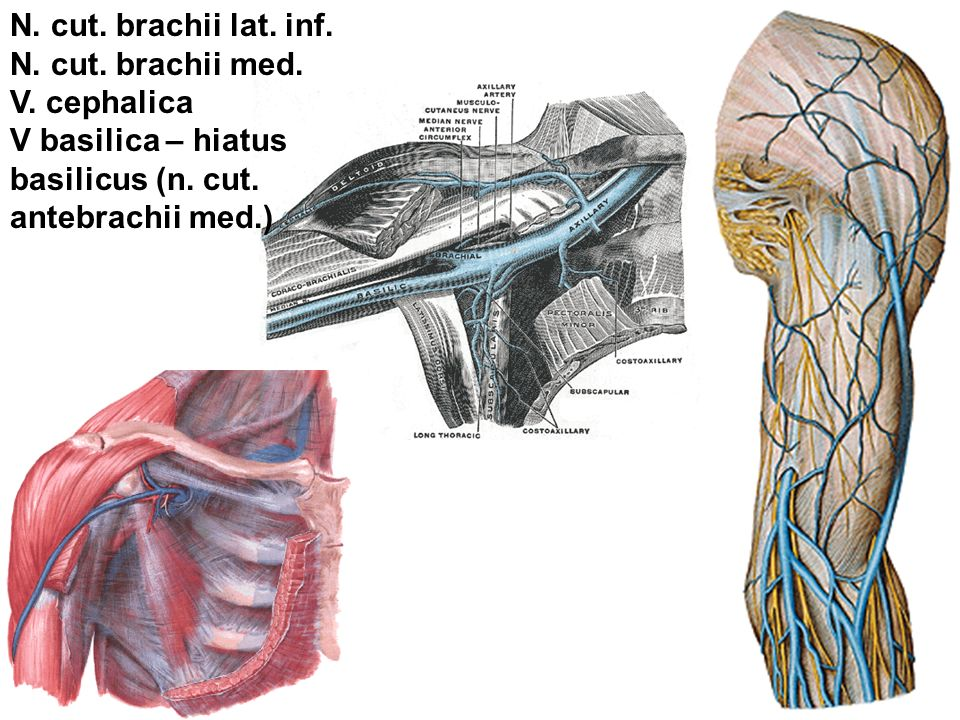 REGIONAL ANATOMY OF TH...