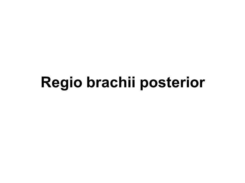 Regio brachii posterior