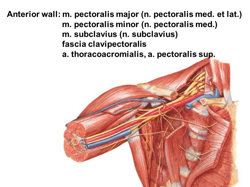 Anterior wall: m. pectoralis major (n. pectoralis med. et lat.)