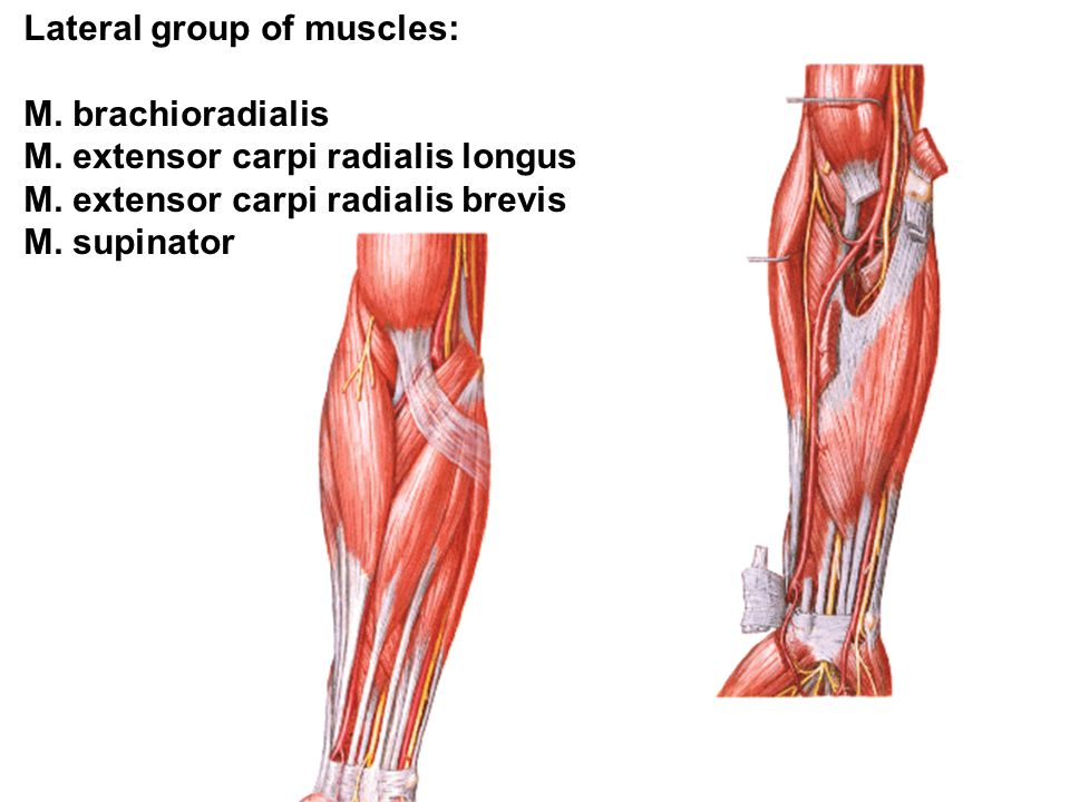 Lateral group of muscles: