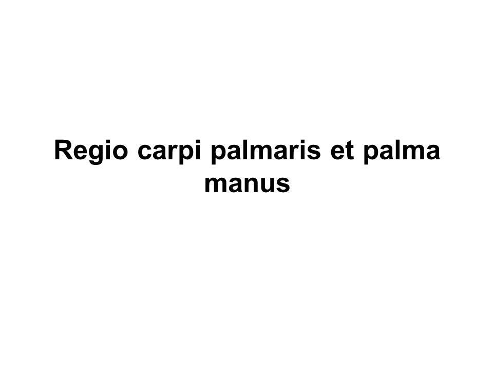 Regio carpi palmaris et palma manus