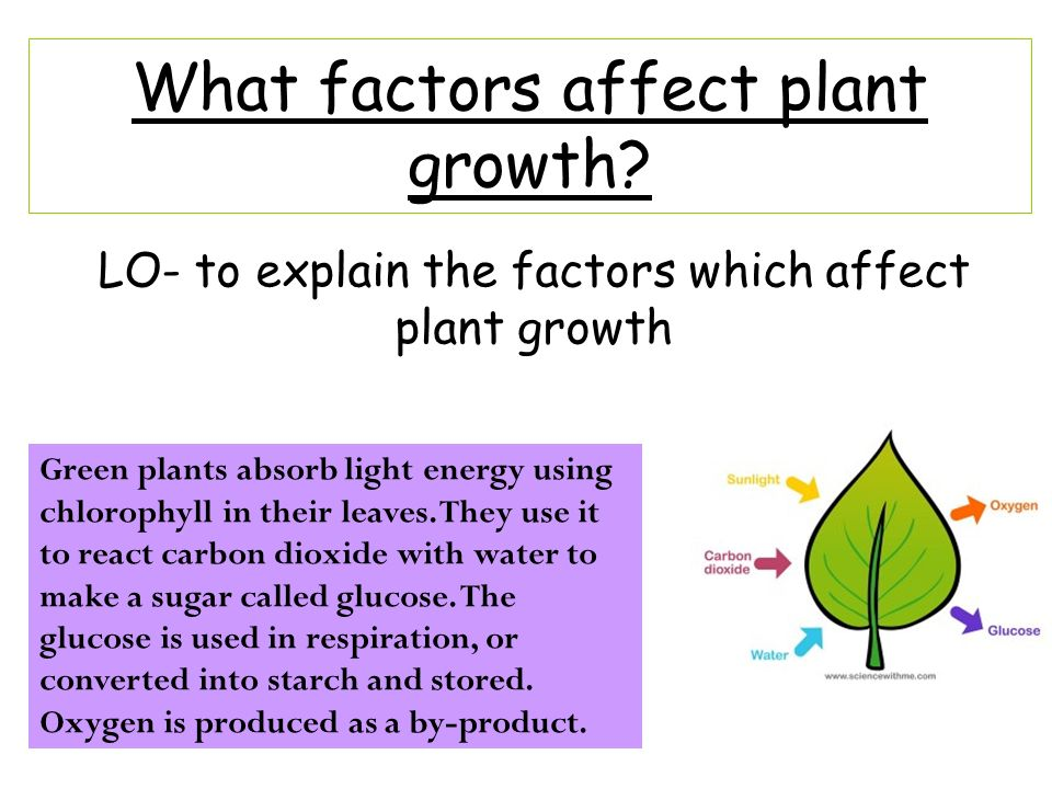 Factors that Affect the Rate of Transpiration: External and Internal Factors