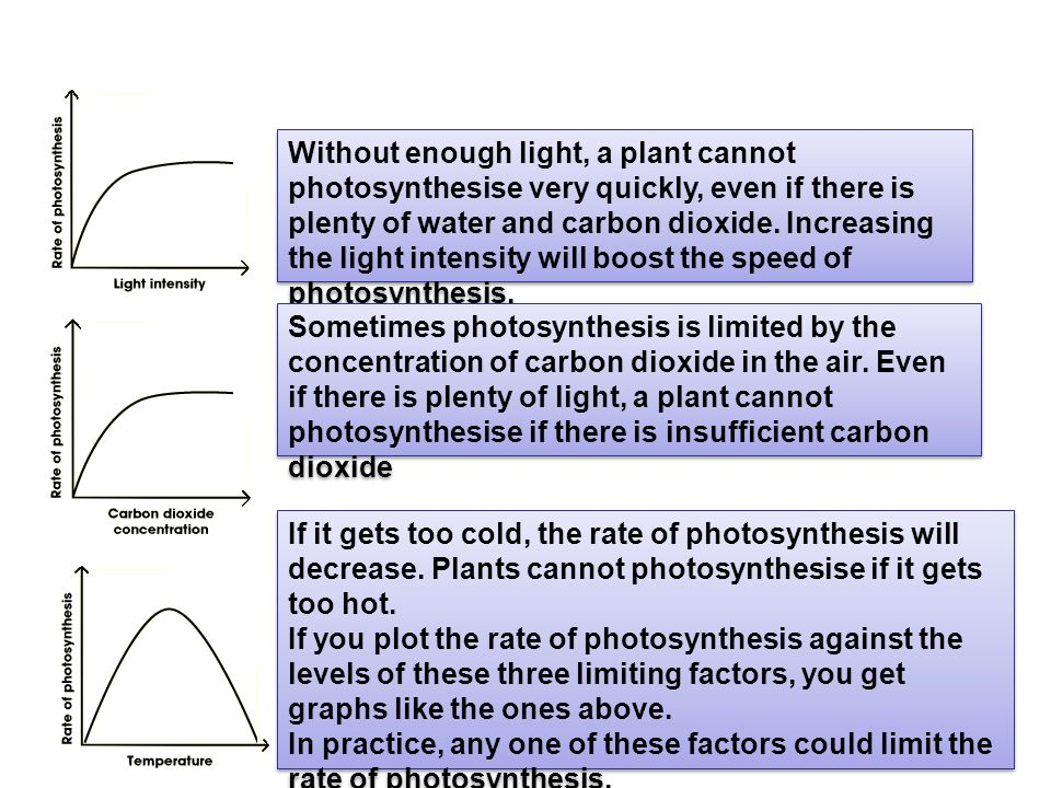 photosynthesis limiting factors Blackman's law of limiting factors blackman proposed the law of limiting factors in 1905 according to this law, when a process depends on a number of factors, its.