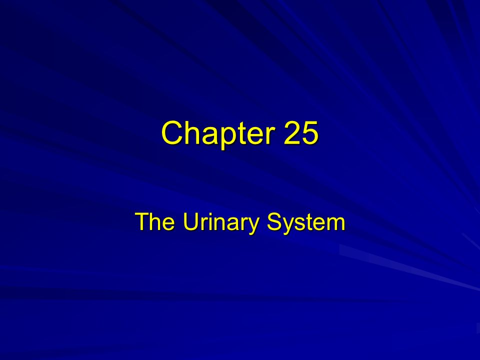 chapter 25 urinary system Anuria refers to a total stop of urine production frequently caused by circulatory  failure with anoxic damage of the tubular system (renal plasma) clearance is a .
