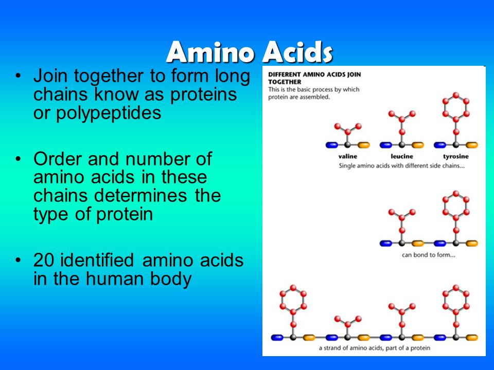Proteins & Enzymes. - ppt download