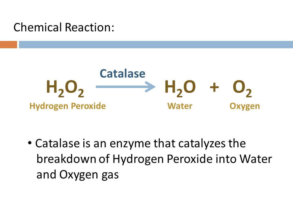 how catalase enzyme works in breaking down hydrogen peroxide into water and oxygen Hydrogen peroxide and enzymatic breakdown by catalase of molecules of hydrogen peroxide to water and oxygen per in the breaking down and treatment of.