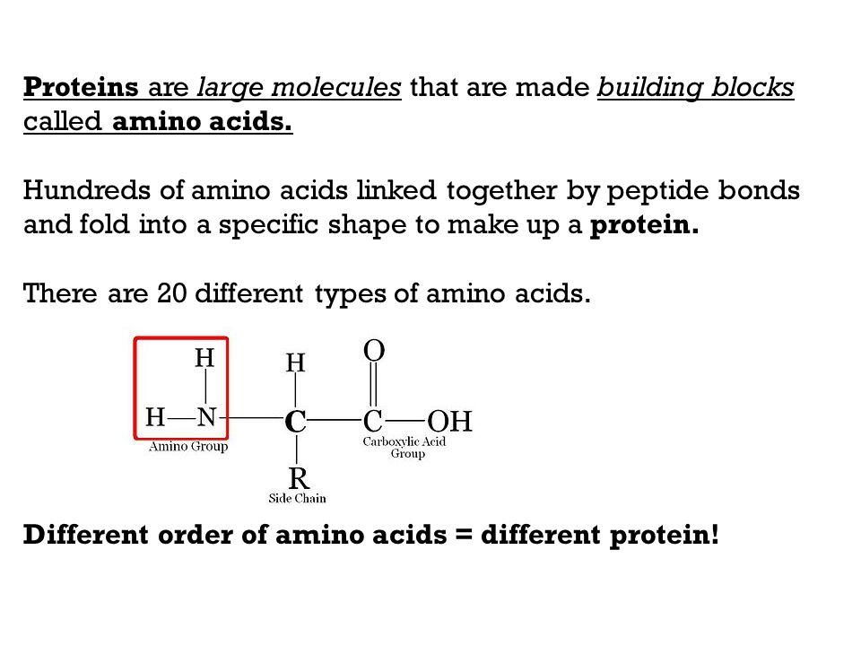 RNA (ribonucleic acid) - ppt video online download