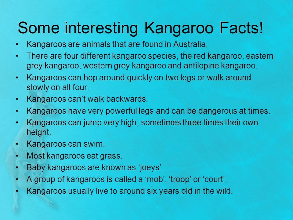 What is a group of kangaroos called? - Fun Trivia Quizzes