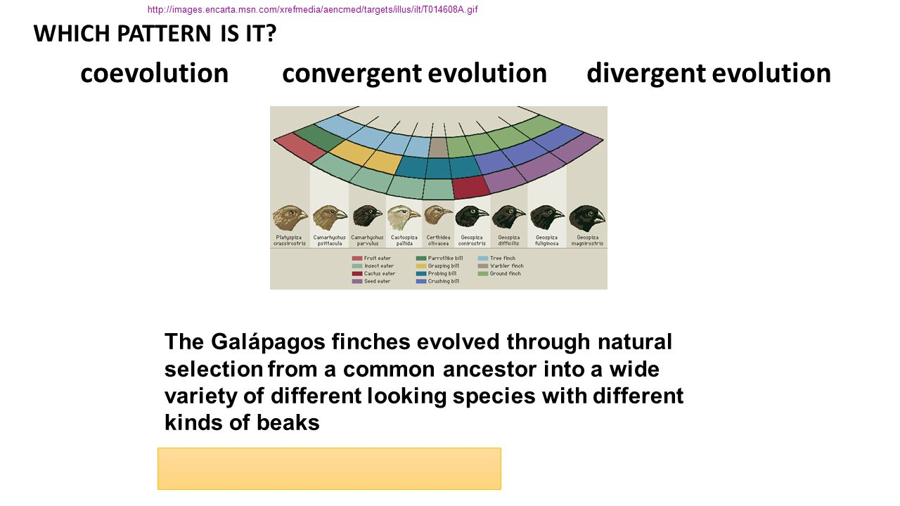 The Galapagos Finches Evolved Through Natural Selection