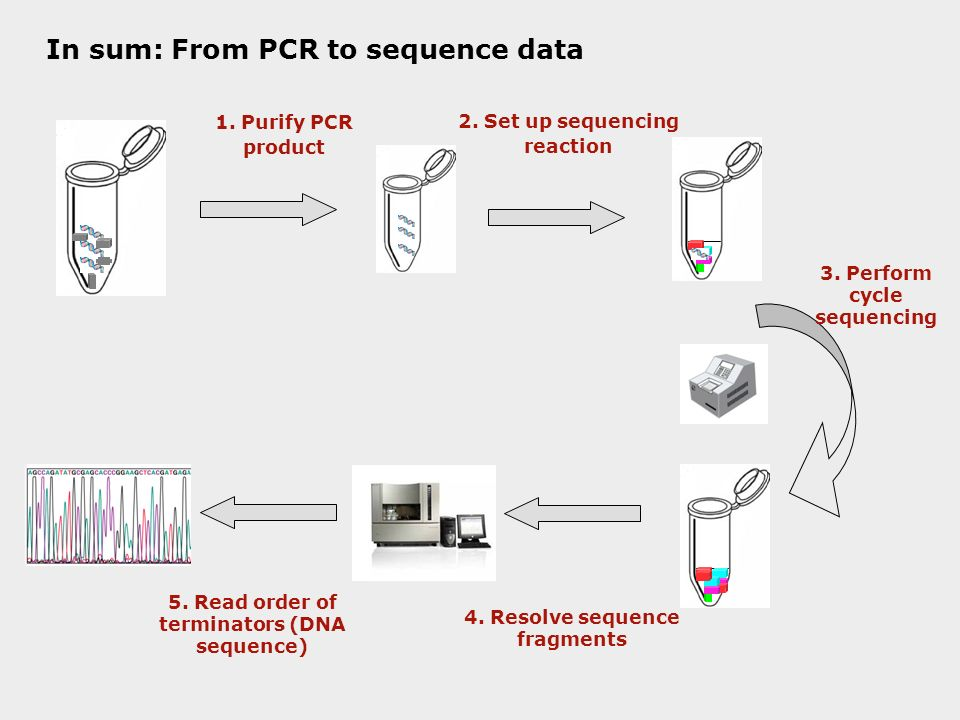 Dna sequencing what when why how who and where dna for How much template dna for pcr