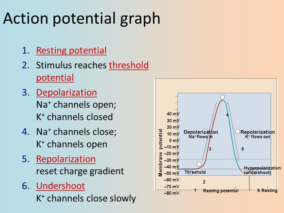 compound action potentials