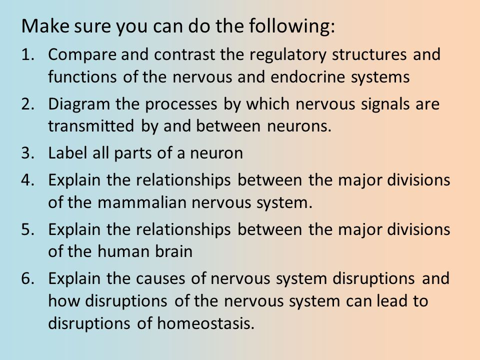 The Relationship Between the Nervous System and Stress