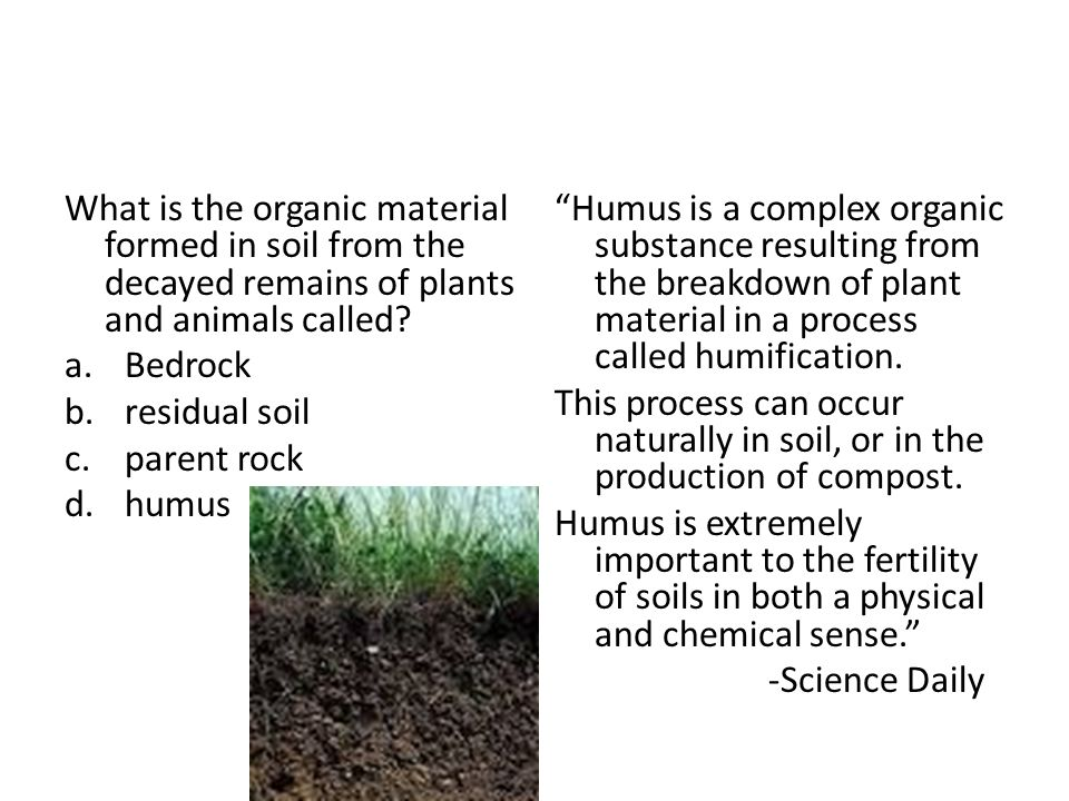 Final review ppt download for What is important to know about soil layers
