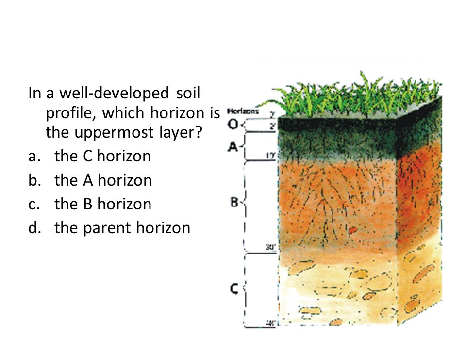 Final review ppt download for Soil zone of accumulation