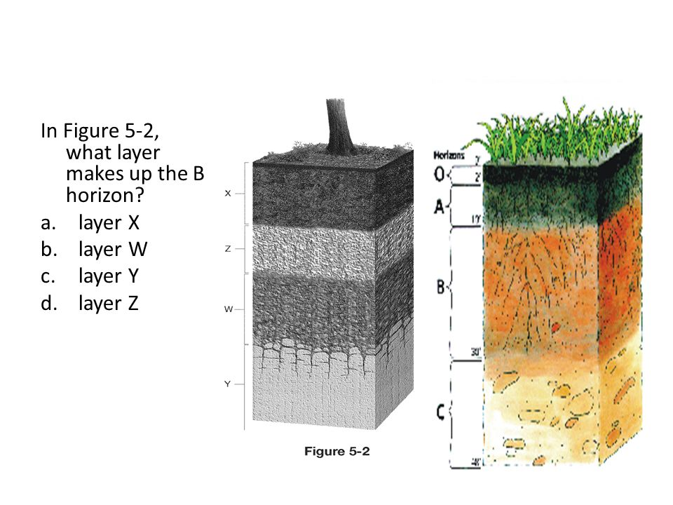 Final review ppt download for What 5 materials make up soil