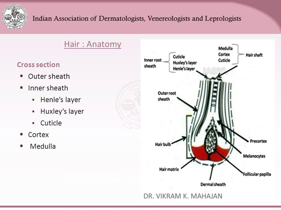 Hair Anatomy Images Images Human Body Anatomy