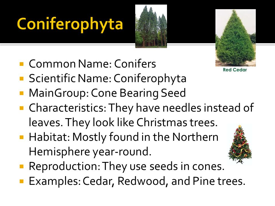 how to write a phylum name