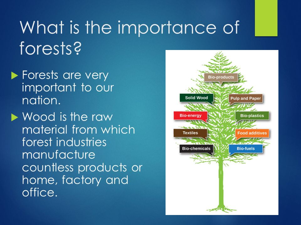What is the Importance of Forests to Human Society?