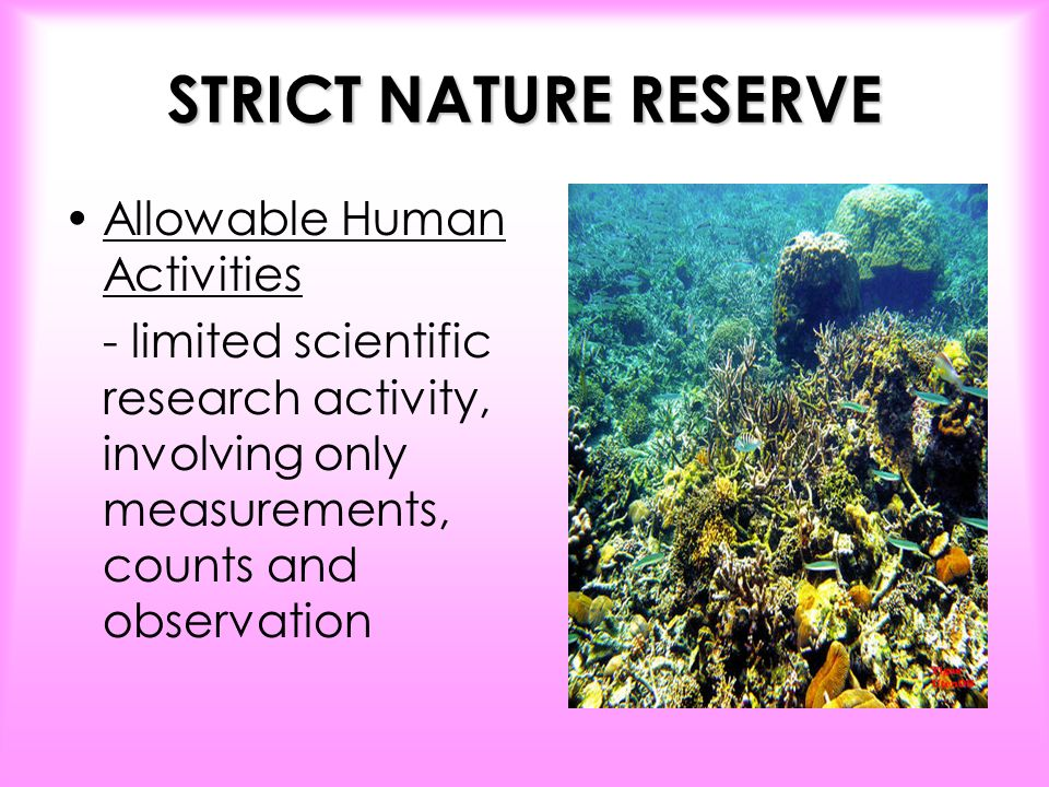 strict natural reserve essay Srilankaview, ritigala forest monastery and strict nature reserve , sri lanka.
