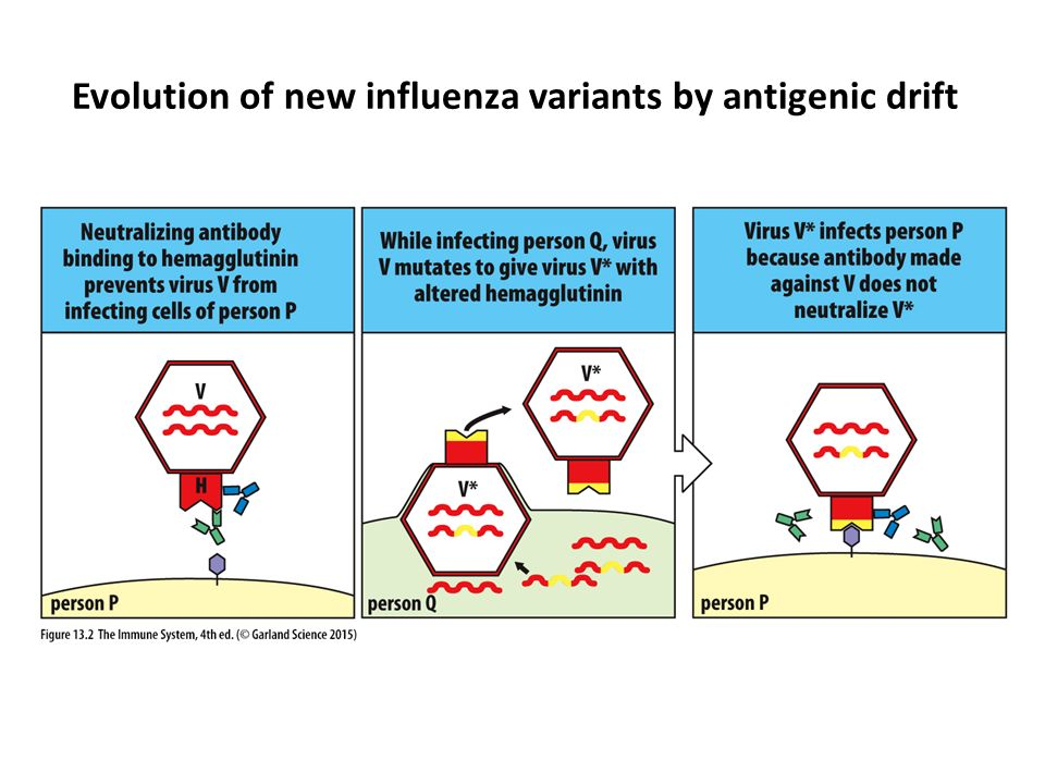 evolving influenza essay Resources for influenza research contribute to caijun/res4flu development by creating an account on github.