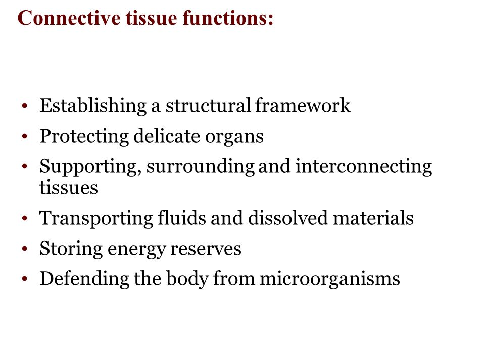 functions of connective tissue The cells forming the connective tissues are more widely separated from each   like substance or dense and rigid depending upon the position and functions.
