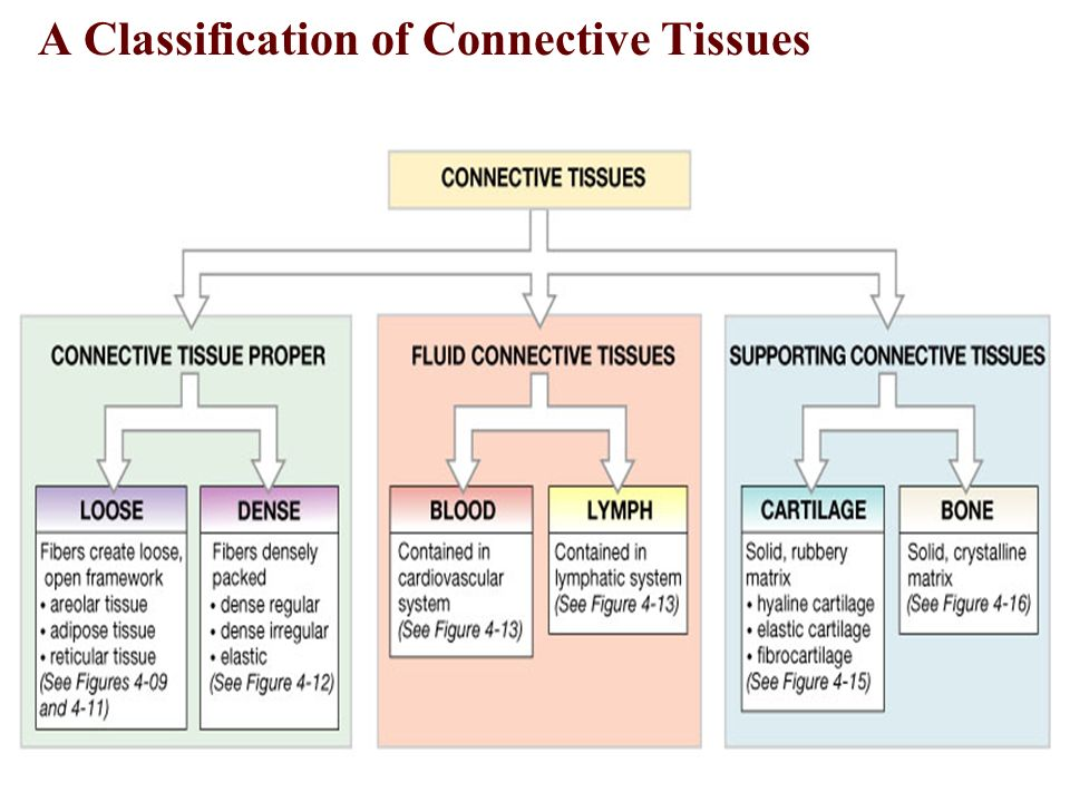 classification of tissues Learn more from webmd about connective tissue disease, including symptoms and causes of various forms skip to main content check your symptoms find a doctor find lowest drug prices these can affect blood flow to the organs and other body tissues vasculitis can involve any of the blood.