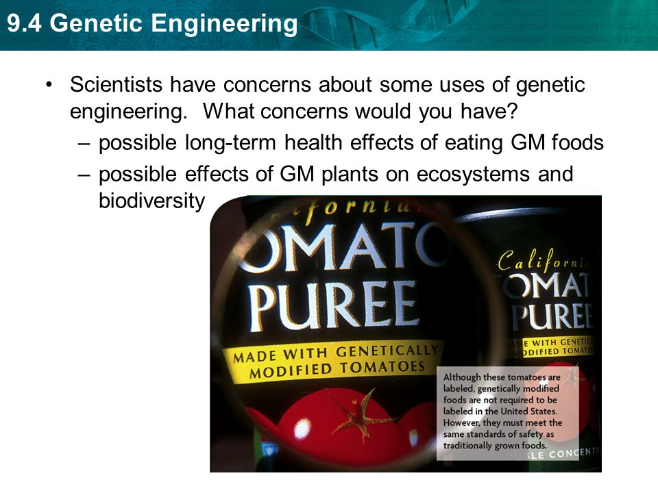possible benefits and dangers of genetic engineering Genetic engineering poses serious risks to human health and to the environment it raises serious ethical questions about the right of human beings to alter life on the planet for the benefit and curiosity of a few.
