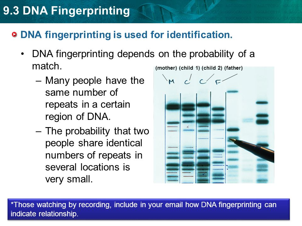 Biology Unit Four H Dna Fingerprinting And Genetic Engineering Ppt