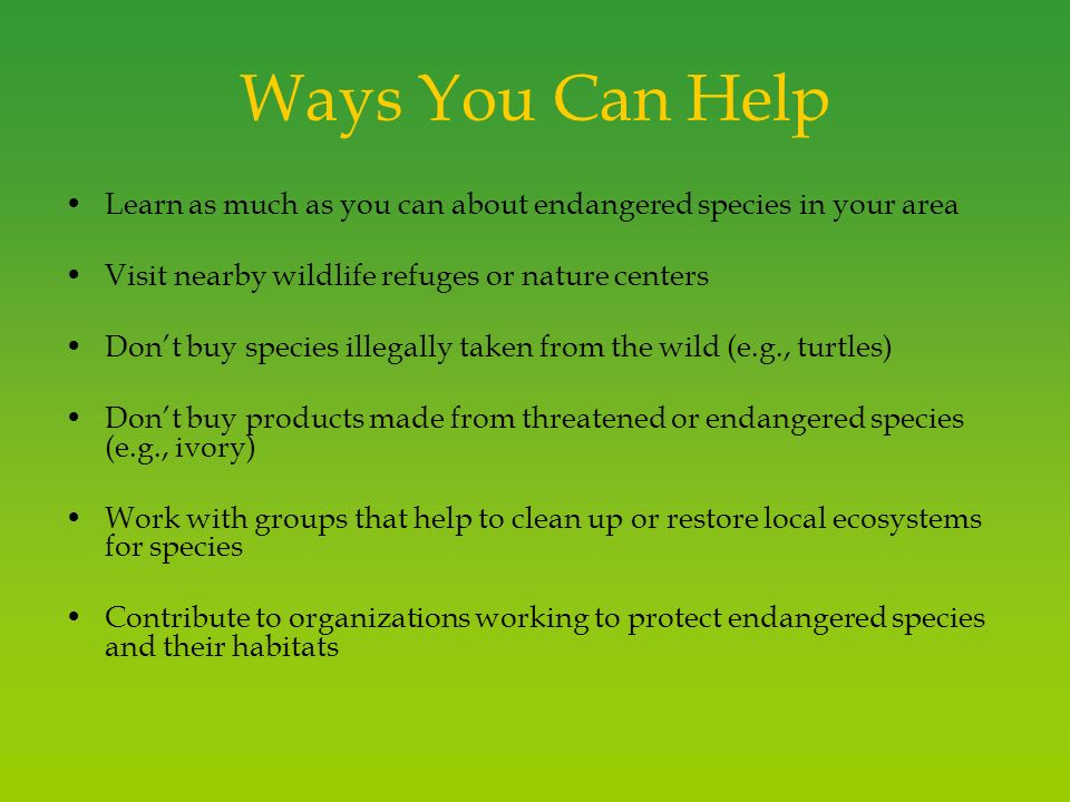 endangered species ppt video online shop