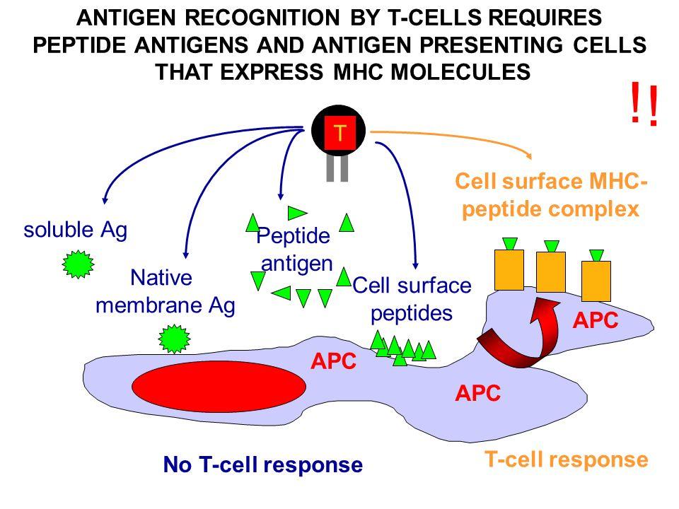 K Antigen T cells Abul K....