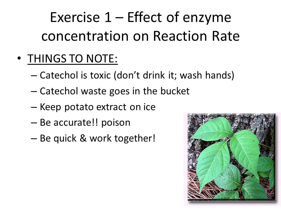 effects of temperature on catecholase The effect of variable catechol concentration on the rate of enzyme  in order to show its effect on  ph concentration and temperature.