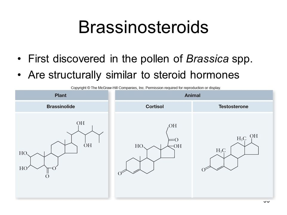 brassinosteroids effects