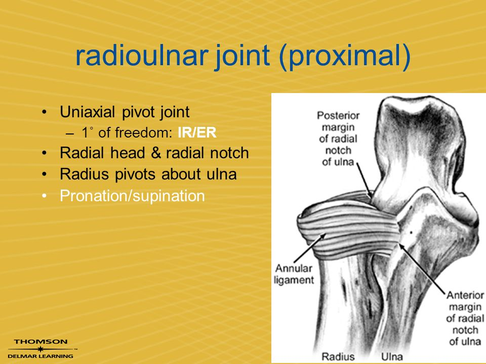 Radial Collateral Ligament Elbow