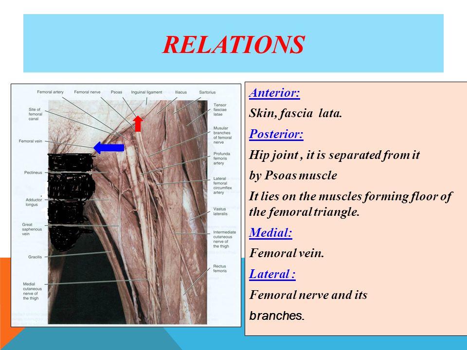 Atemberaubend Https Openstax Org Details Anatomie Und Physiologie ...