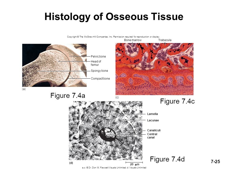 histology tissues and tissue observations data