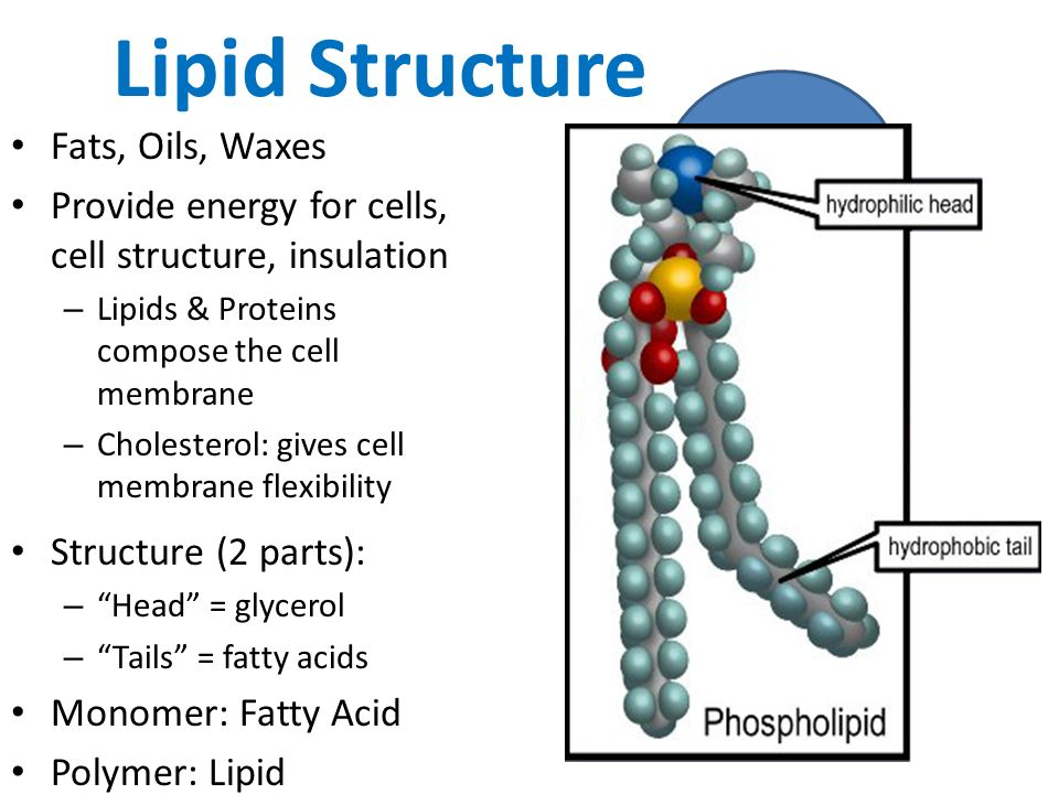 lipid This is the first paper to show that rather than being a 'second hit' to help initiate the disease, blocking lipid synthesis alone -- with no other insult to the lungs -.