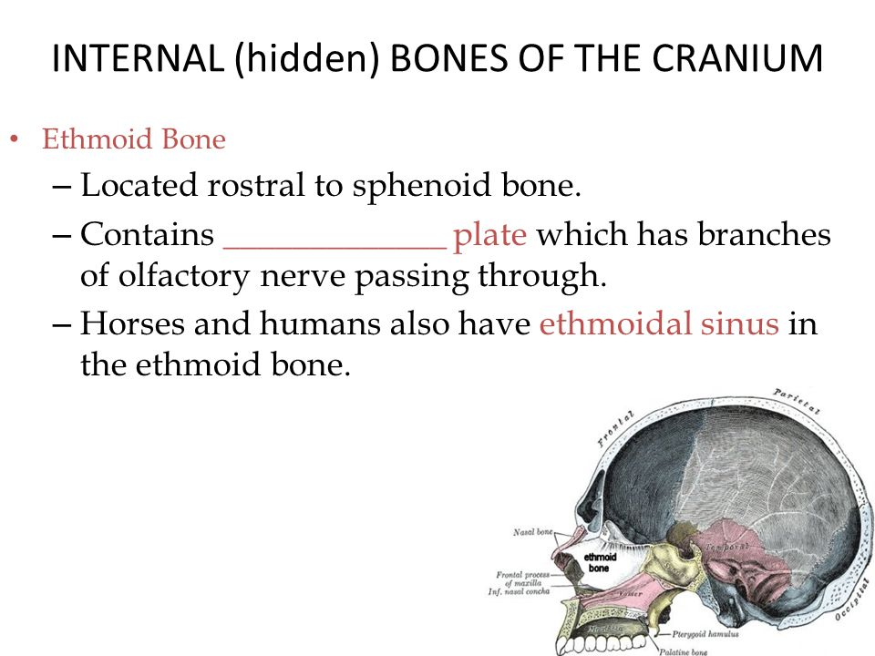 Common Bone Features: Holes and Depressed Areas - ppt video online ...
