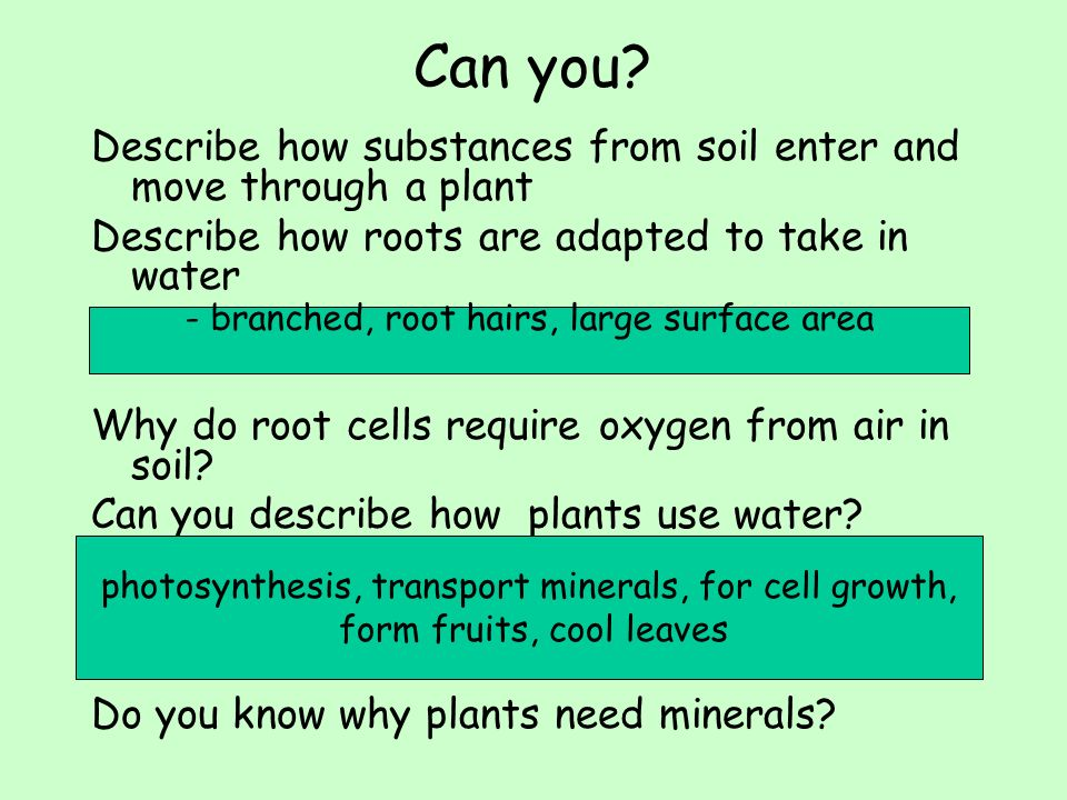 Lesson 4 roots water and minerals ppt video online for What substances are in soil