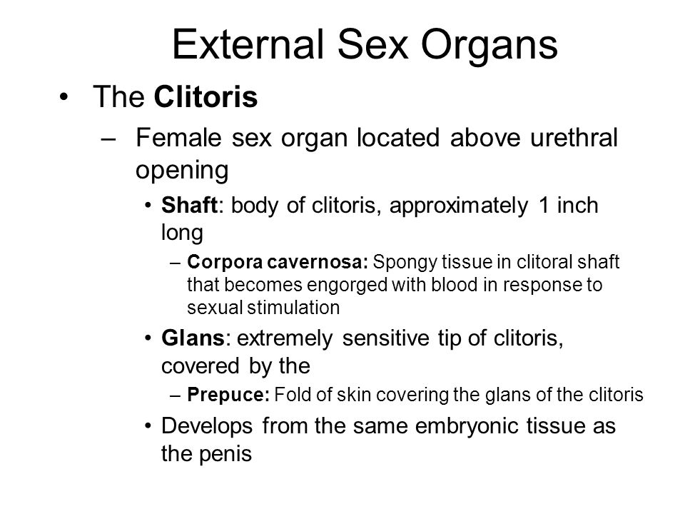 clitoris blood engorged