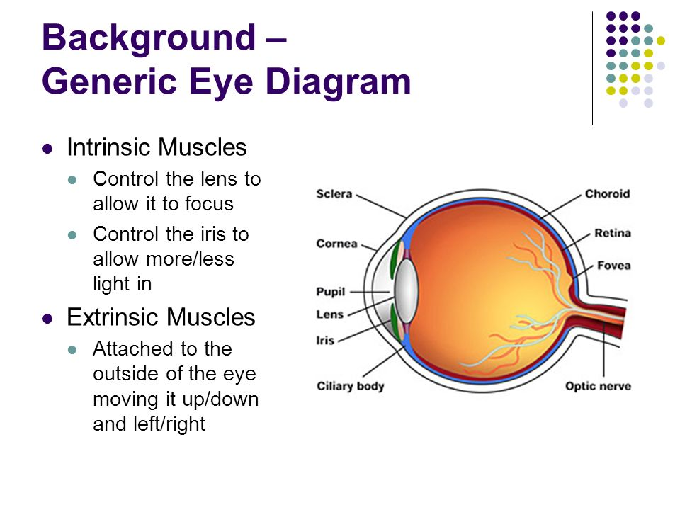 senses lab sight how do our eyes work why do they work