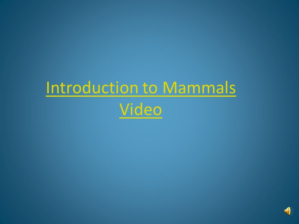 Introduction to Mammals Video