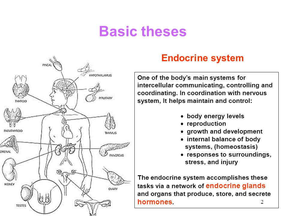 Of endocrine disorders ppt download basic theses endocrine system ccuart Image collections